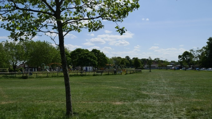 Photo of a single small tree trunk in a grassy park. There's a playground in the background.