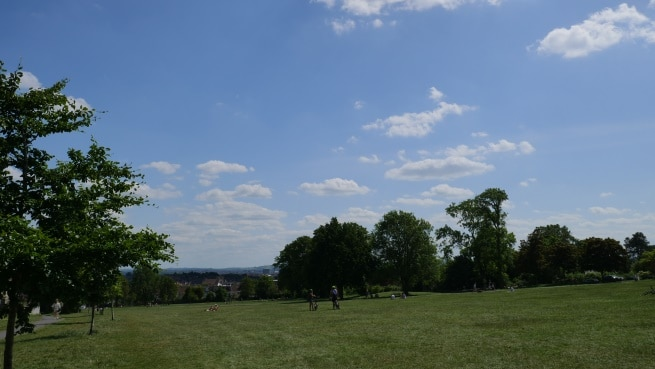 Photo of a grassy park with big trees in the background. There are people walking dogs and others lying down and sitting on the grass.