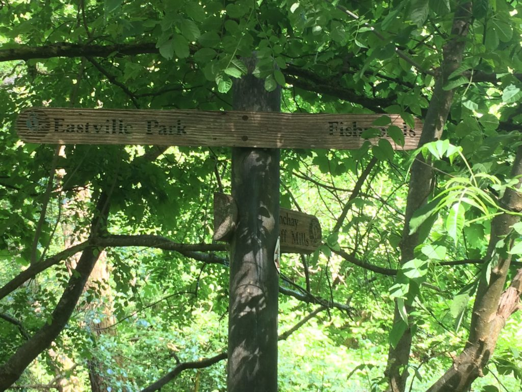 Photo of route signs nailed to a big tree trunk. Eastvill Park to the left, Fishponds to the right.
